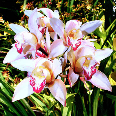 San Diego Artist Photograph - Pink Spirit Orchids Palm Springs by William Dey