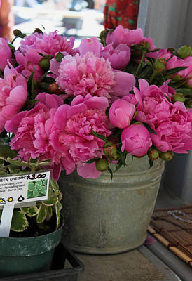 Pink Peonies For Sale Original by Suzanne Gaff