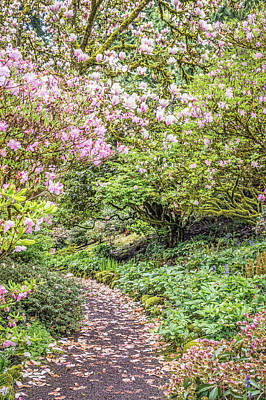 Gardening Photograph - Pink Petal Pathway by Priya Ghose