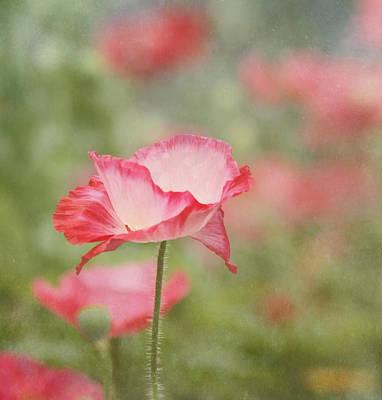Pink Poppy Print by Kim Hojnacki