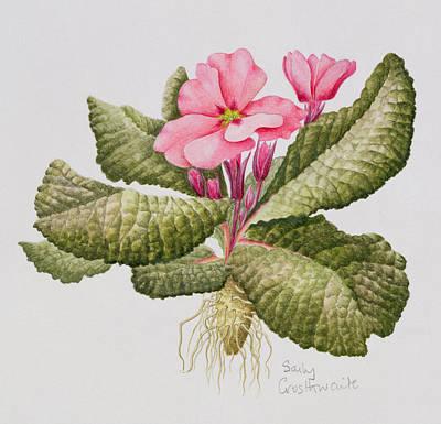 Pink Primrose Print by Sally Crosthwaite