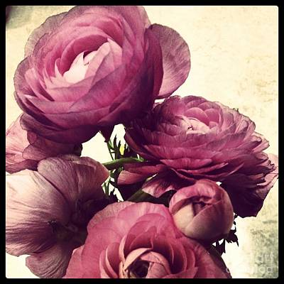 Early Spring Mixed Media - Pink  Ranunculus by Heather L Wright