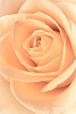 Flower Design Photograph - Pink Rose by Edward Fielding