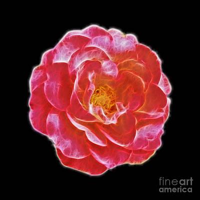 Fractal Design Digital Art - Pink Rose Fractal Design by Image World