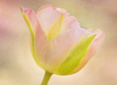 Pink Spring Dreams Close Print by Mary Jo Allen
