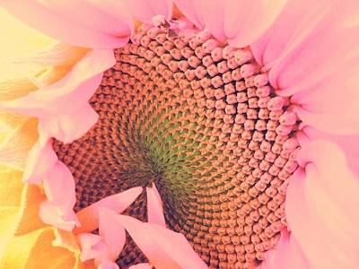 Home Decoration Photograph - Pink Sunflower by Marianna Mills