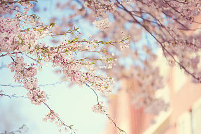 Pink Touch Of Softness. Pink Spring In Amsterdam Print by Jenny Rainbow