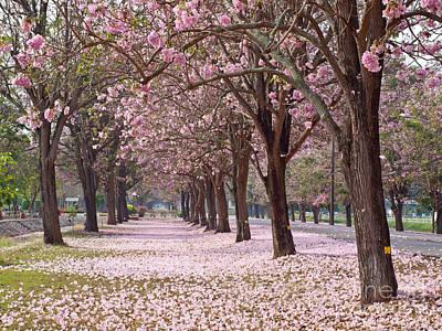 Pink Trumpet Tree Print by Sarun T