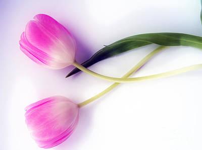 Pink Tulips Print by Nina Ficur Feenan