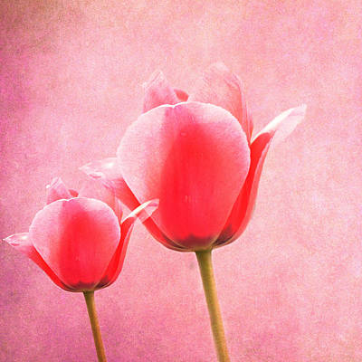 Pink Tulips Print by Art Spectrum