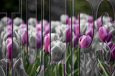 Tulip Photograph - Pink Tulips by Trish Tritz