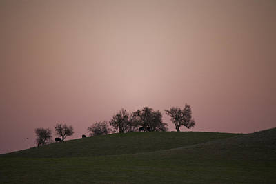 Pink Twilight Print by Joel Moranton