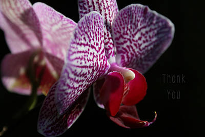 Orchids Photograph - Pink White Orchids And A Reminder To Utter The Words Thank You. by Raenell Ochampaugh