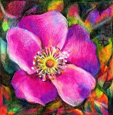 Projects Drawing - Pink Wild Flower. Alberta Flood Project by Anna  Duyunova