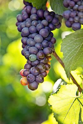 Bunch Of Grapes Photograph - Pinot Noir by Scott Pellegrin