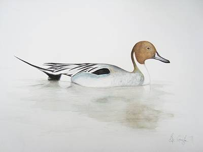 Pin Drawing - Pintail Duck by Ele Grafton