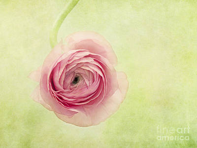 Buttercup Photograph - Pistache And Pink by Priska Wettstein