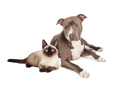 Pit Bull Dog And Siamese Cat Print by Susan  Schmitz