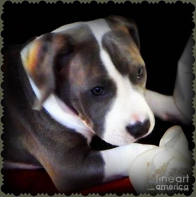 Pitty Lil Puppy Print by Bobbee Rickard
