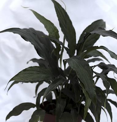 Gigapan Photograph - Plant Life by William Ragan