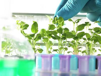 Plant Research Print by Tek Image