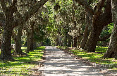 Georgia Plantation Photograph - Plantation Road by Louise Heusinkveld