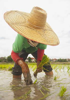 Planting New Ricechiang Mai Thailand Print by Stuart Corlett