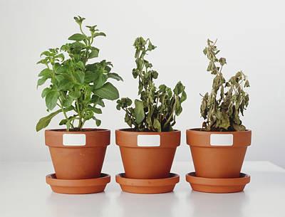 Plants Affected By Acid Rain Print by Dorling Kindersley/uig