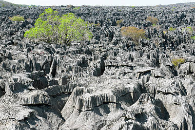 Strict Photograph - Plants Growing On Limestone Rocks by Dr P. Marazzi