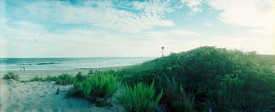 Plants On The Beach, Fort Tilden Beach Print by Panoramic Images