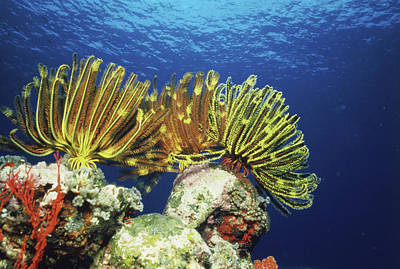 Plants Undersea, Okinawa Prefecture Print by Panoramic Images