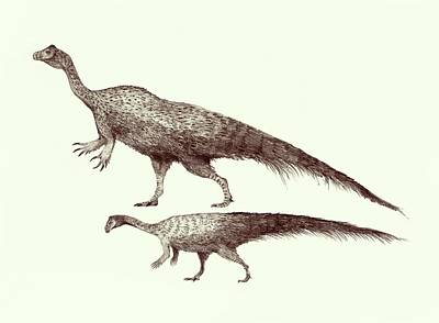 Extinct Reptile Photograph - Plateosaurus Dinosaurs by Nemo Ramjet