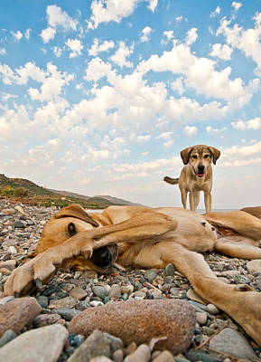 Two Faces Photograph - Playful Dogs On The Beach by Leyla Ismet