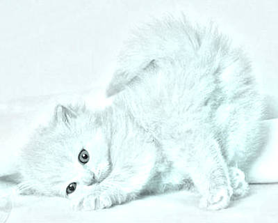 Playful Kitty Print by J D Owen