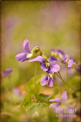 Playful Wild Violets Print by Lois Bryan