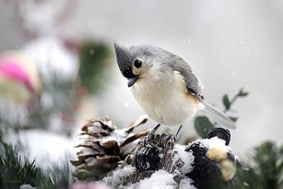 Titmouse Photograph - Playful Winter Titmouse by Christina Rollo