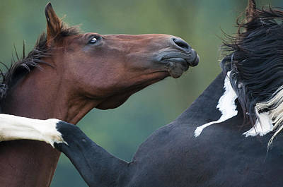 Grapple Photograph - Playing Horses by Andy-Kim Moeller