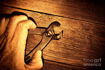 Pliers Print by Olivier Le Queinec