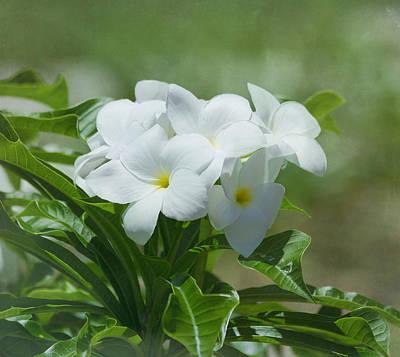 Plumeria - Tropical Flowers Print by Kim Hojnacki