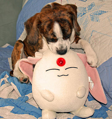 Beagle Photograph - Plush Puppy by Felix Concepcion