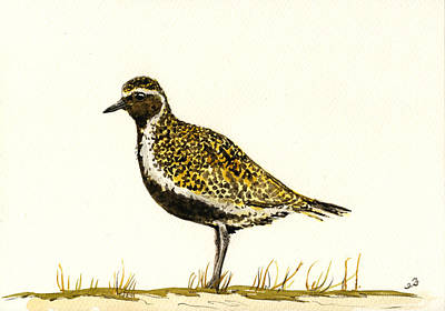 Plovers Painting - Pluvialis Apricaria by Juan  Bosco