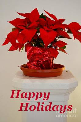 Photograph - Poinsettia On A Pedestal - No 2 by Mary Deal