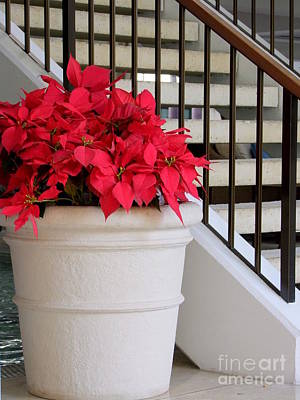 Photograph - Poinsettias By The Stairway by Mary Deal