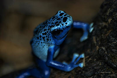 Salamanders Digital Art - Poisonous Blue Frog 02 by Thomas Woolworth