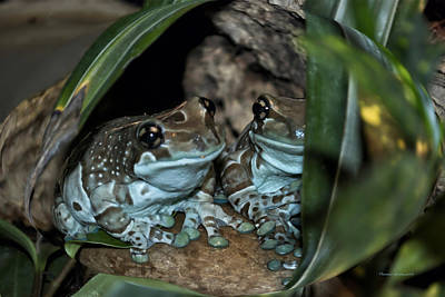 Poisonous Frogs With Sticky Feet Print by Thomas Woolworth