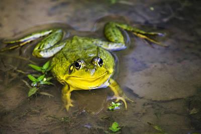 Bullfrog Photograph - Pokey Green Frog by Christina Rollo