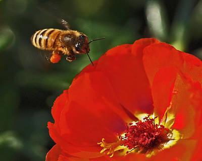 Pollination Print by Rona Black