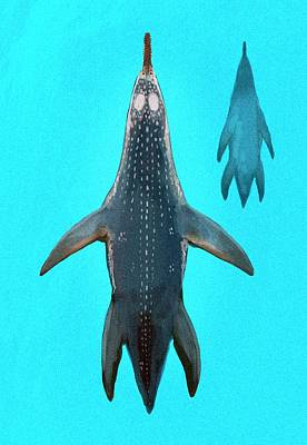 Extinct Reptile Photograph - Polycotylus Marine Dinosaur by Nemo Ramjet