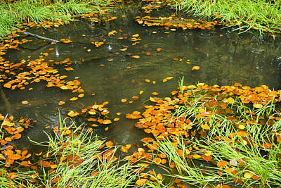 Green And Brown Photograph - Pond In Fall With Green Grass And Brown Foliage by Matthias Hauser