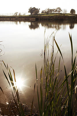 Pond Print by Les Cunliffe